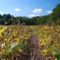64 Acre Tillable and Hunting Farm For Sale in Cherokee County, KS!