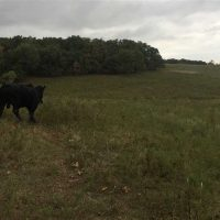 90 Acre Cattle pasture and hunting property located in Nowata Co, OK *SOLD*