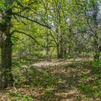 549 Acres McClain County, River Run Ranch on the Canadian River