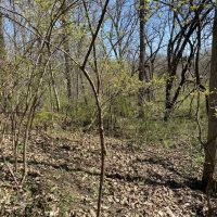 Beautiful 25 +/- acres buildable lot Lafayette County, Missouri at 5200 Gillen Road, for 155000.0000