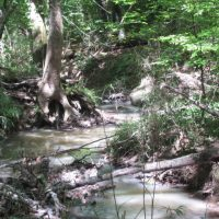 Little River Island Property Pushmataha County, OK 58 AC