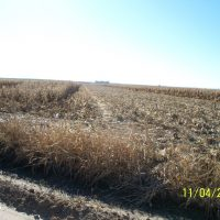 Agricultural Land for Sale in Morton County, KS