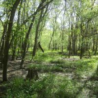 Hunting Land for Sale in Carroll County, MO