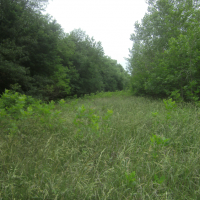 Hunting Land for Sale in Saline County, MO