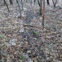 Hunting Land for Sale in Labette County, KS