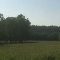 60 Acres of hunting ground with live creek just 20 minutes from Camdenton