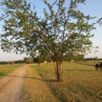Bermuda Pastureland with Home for sale in Choctaw County, OK 106 AC