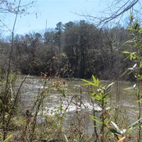 Little River Frontage with Cabin in McCurtain County, OK 40 AC